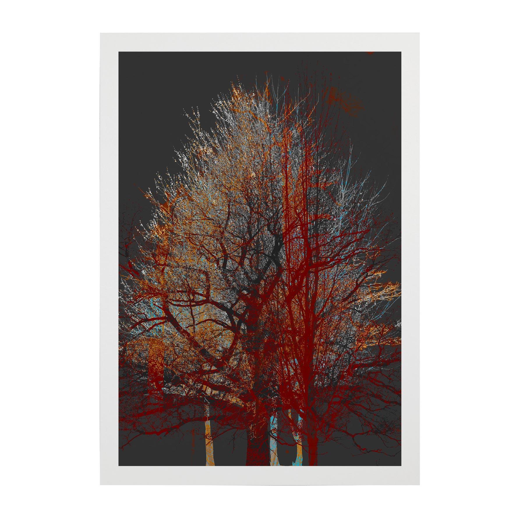 TREE-WEB-PICS-1