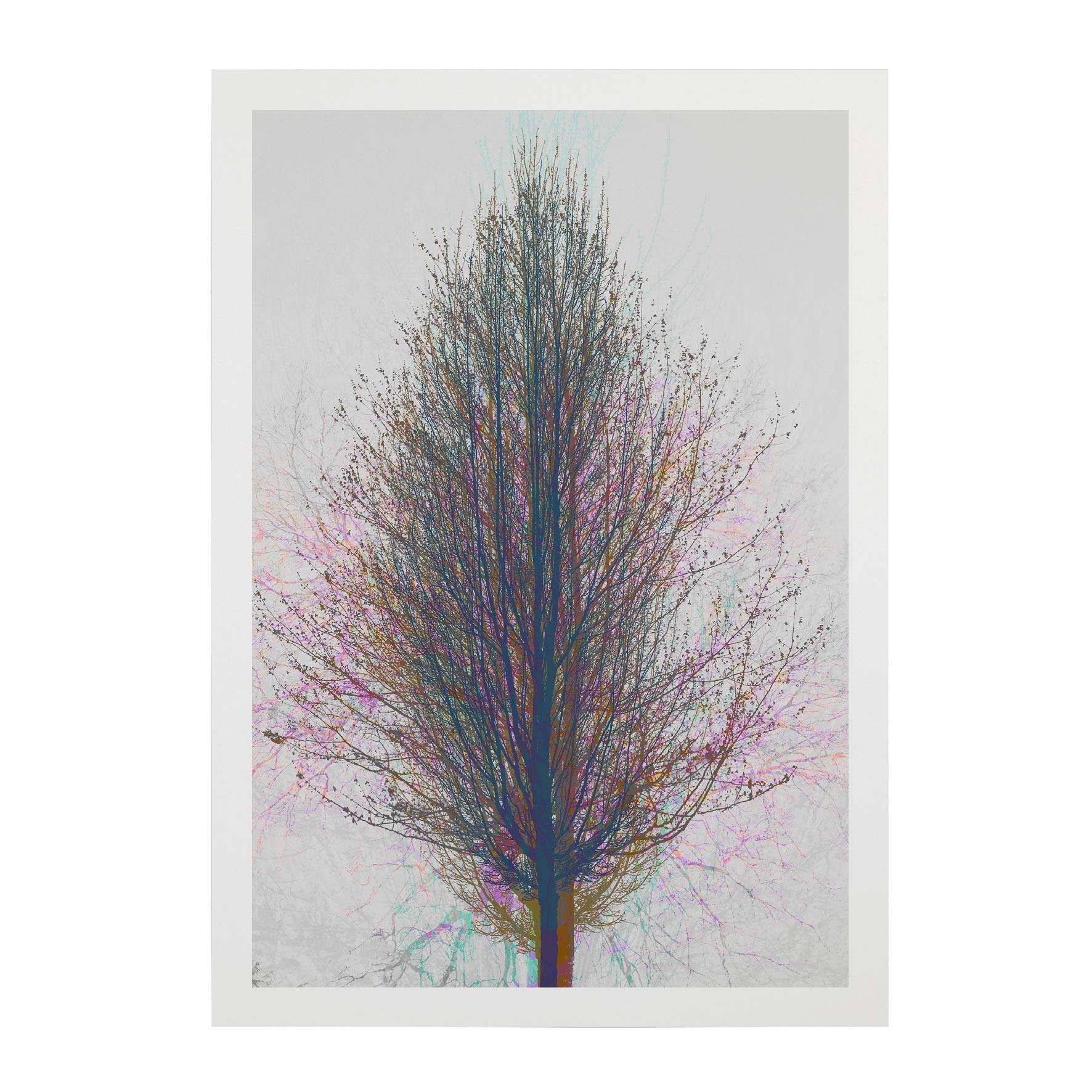 TREE-WEB-PICS-11