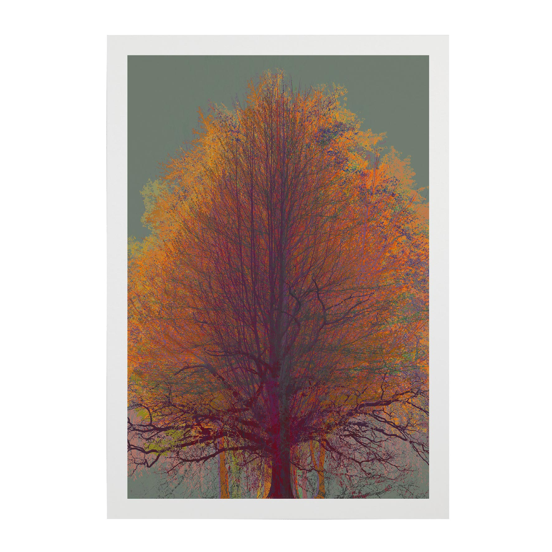 TREE-WEB-PICS-13