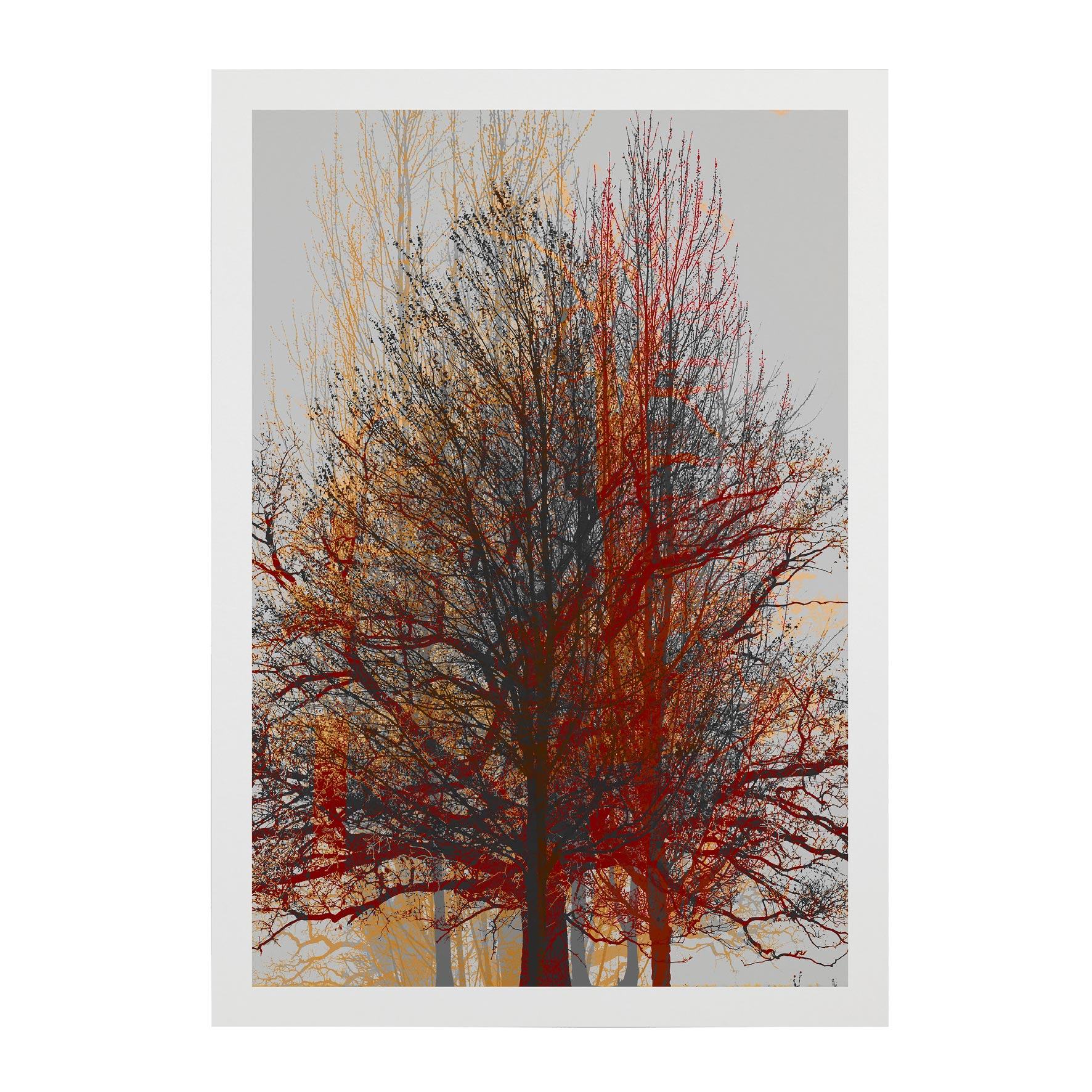 TREE-WEB-PICS-3