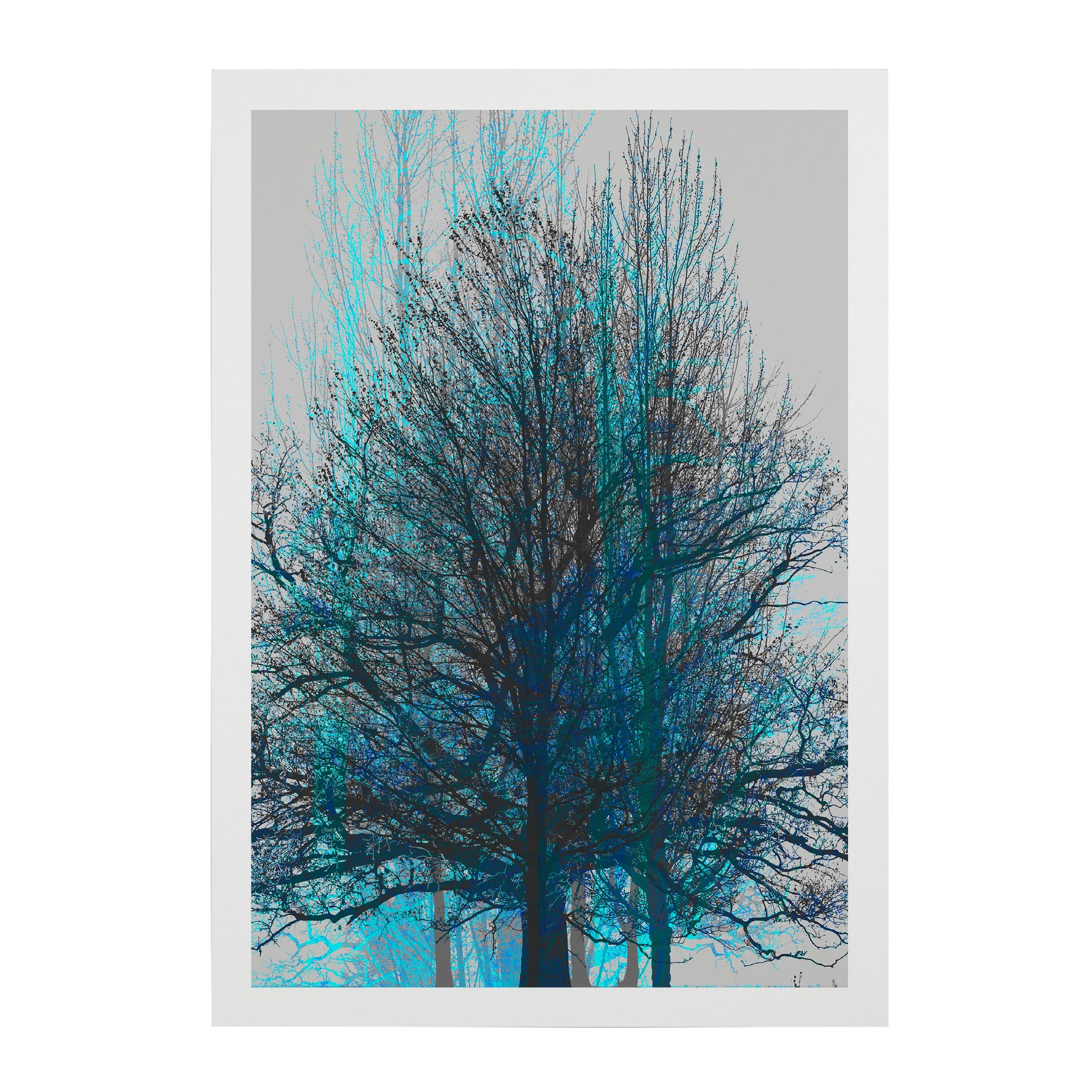 TREE-WEB-PICS-4