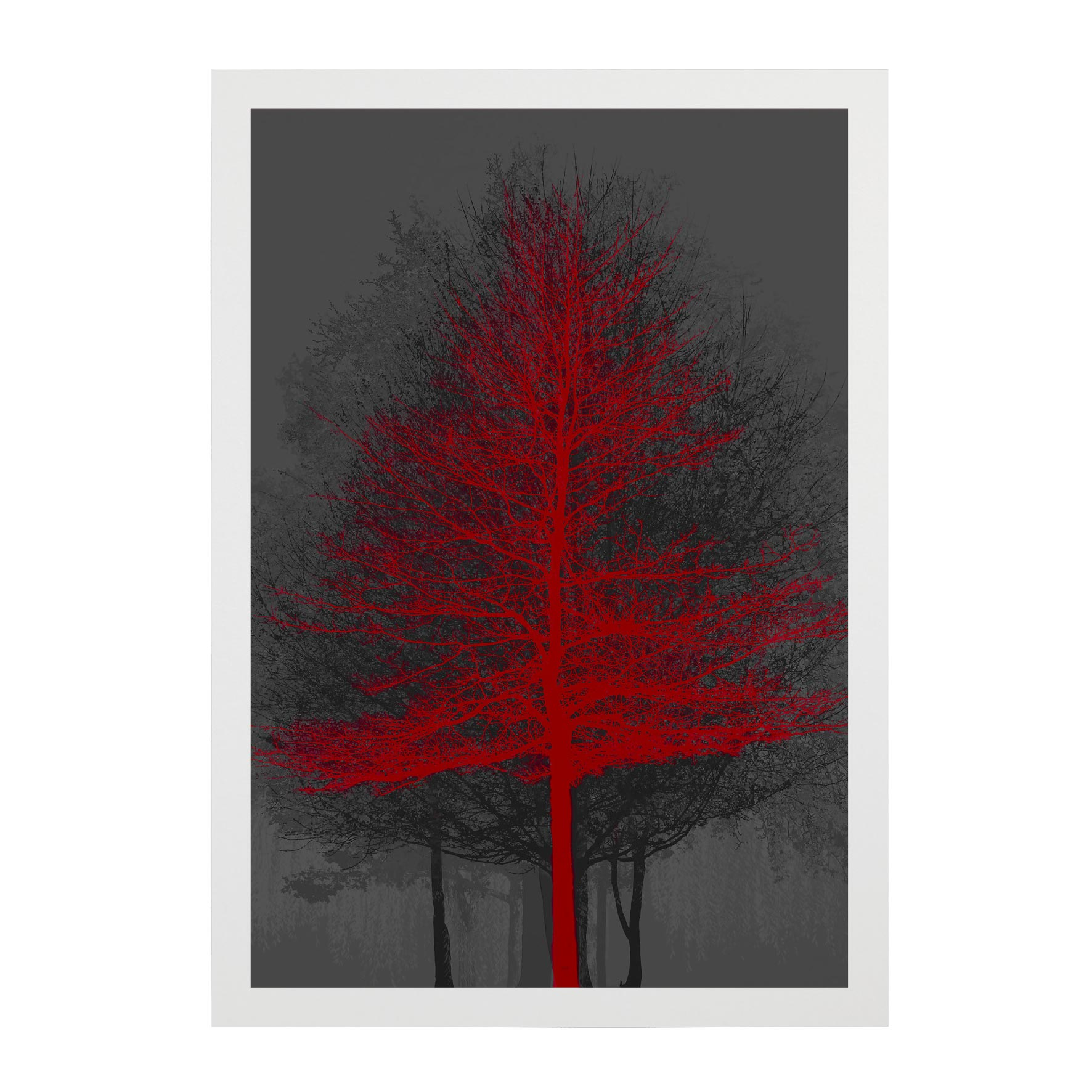 TREE-WEB-PICS-7