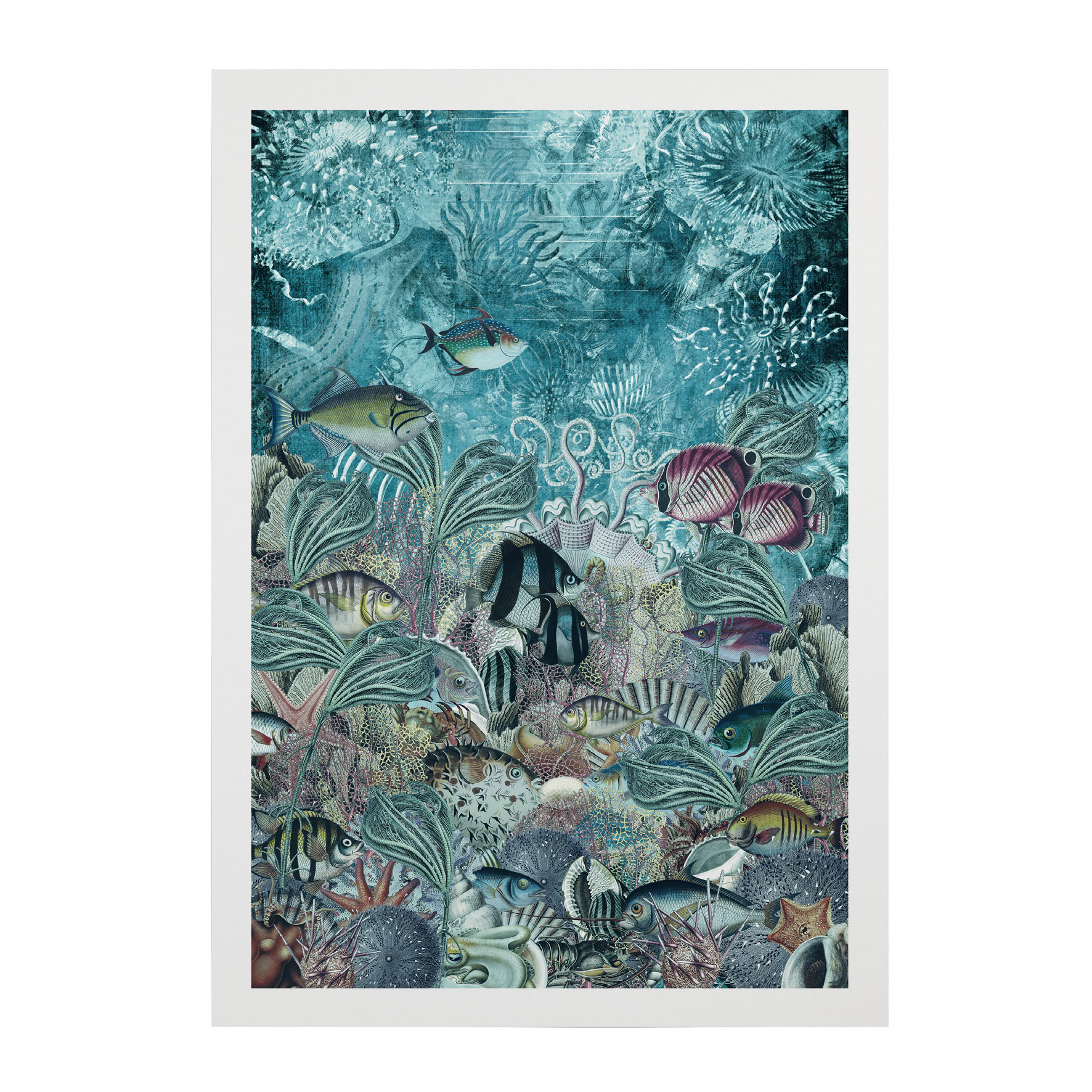SHOAL-OF-FISH-WEB-PICS-6